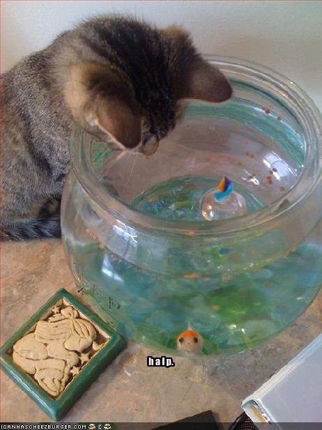 "Cat looking into fish bowl. Fish says ""HALP""."